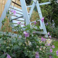 Lynstead House Garden